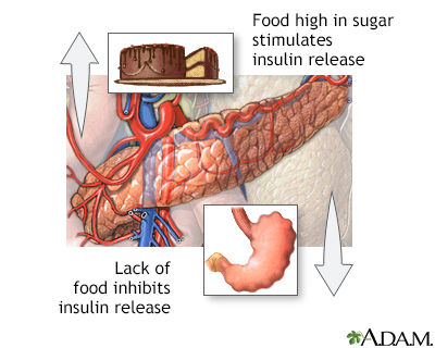 Food and insulin release